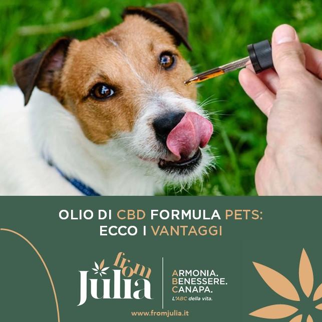 Benefici del CBD per gli animali